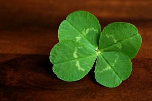four-leaf-clover2